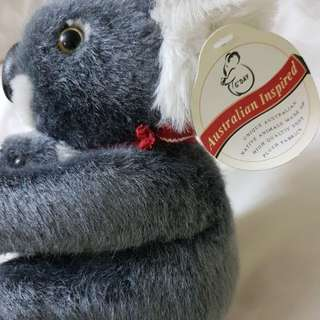 Koala from Australia