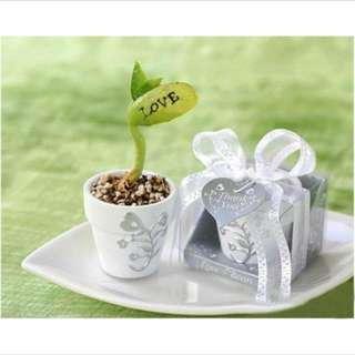 Magic Message Seeds Gift Plant