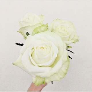 Roses China - White