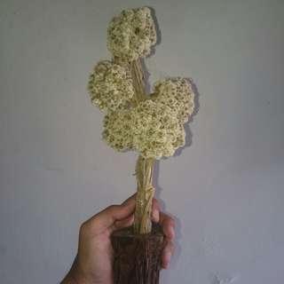 Bunga abadi/edelwis