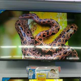 Sharp LED TV 50""