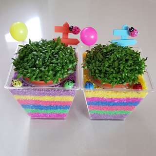 New Stock Indoor Happy Plant For Office & Gift!