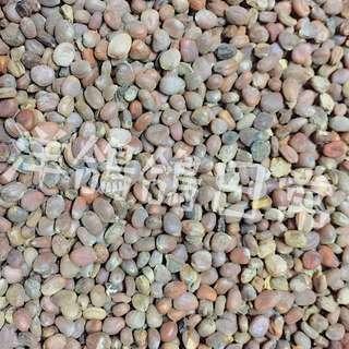 《菜頭籽》單包600公克、鳥飼料