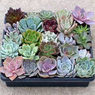 Small plants Succulent, Jade and Cactus