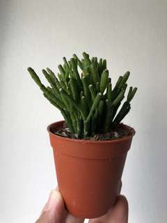 [READY STOCK!] Potted Succulent