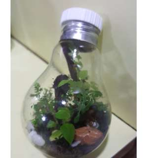 LIGHT BULB TERRARIUM FOR SALE!!