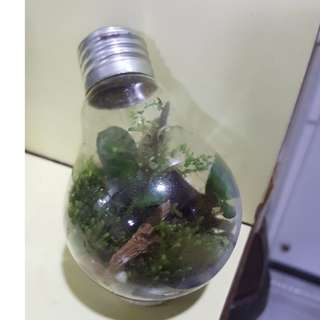 LIGHT BULB BASE TERRARIUM FOR SALE!!