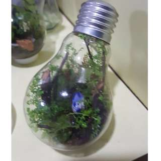 LITTLE BIRD LIGHT BULB TERRARIUM FOR SALE!!