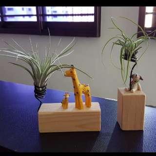 Air plant wooden holder