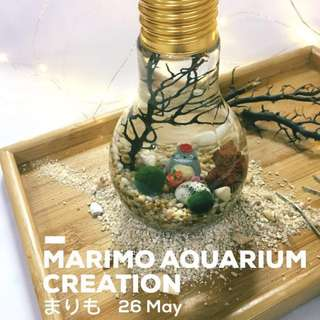 😍MARIMO まりも AQUARIUM WORKSHOP (26 May @ ARTBOX2018. Limited Slots! Sign up now!)🌿