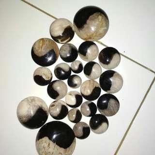 Fossil kelor ying yang