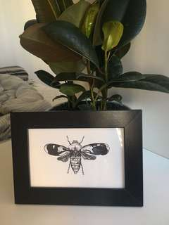 Insect Illustration with Photo Frame