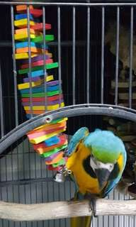 Color Blocks Medium/Large Parrot Macaw Toy