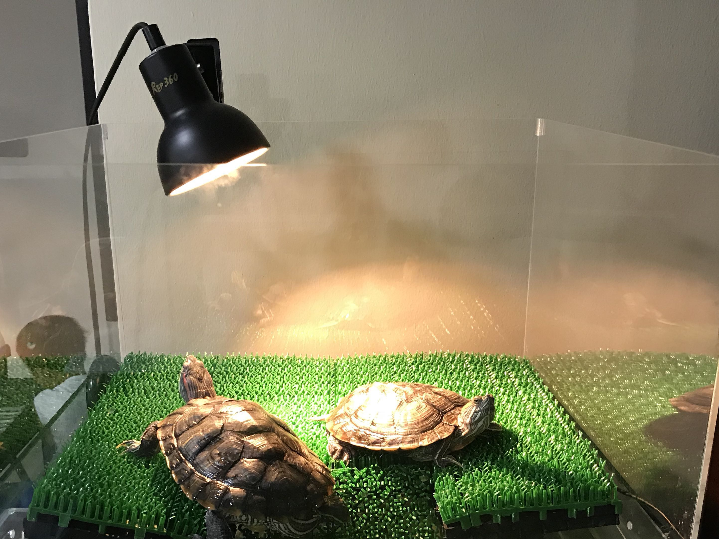 Reptile 360 Basking Lamp With 25w Uva Uvb Bulb On Carousell