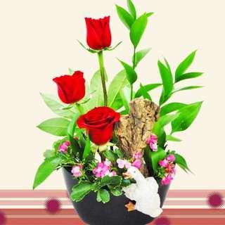 Mini-swan & 3 Red Roses in Plastic Vase (075-RR)