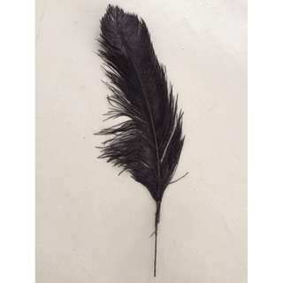 """Black Feather 27"""" for RENT"""