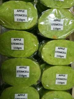 APPLE STEMCELL OVAL SOAP PHP 12 WHOLESALE