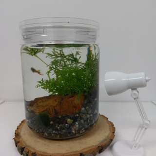 Bottled Aquarium