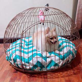 Bow House Modern dog cage