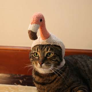 cats_日系 紅鶴 / 火獵鳥頭套 寵物cosplay頭套