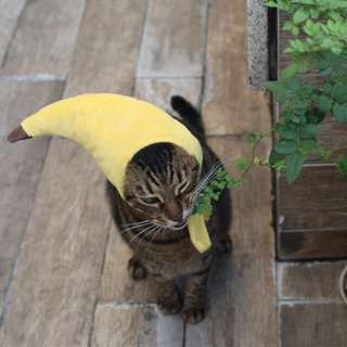 CATS_ 日系 香蕉頭套寵物造型帽子