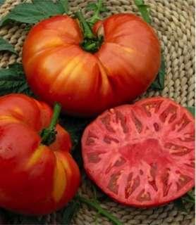 Tomato 'Costoluto Genovese' seeds