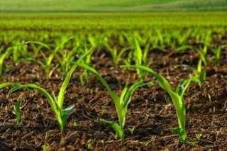 Organic Chicken manure fertiliser
