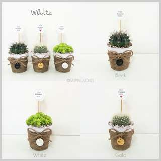 [WHITE] Cactus & Succulents in Personalised Pot