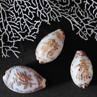 Handcarved Large Cowrie Shell