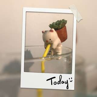 Succulent plant with auto watering neko
