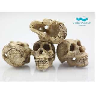 New Design Aquarium Resin Skull