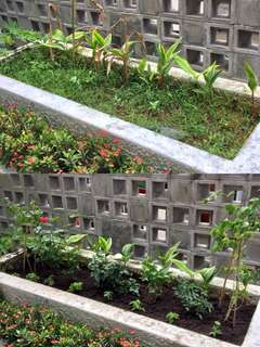 Creation of Edible Garden