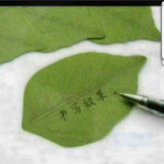 In Stock Creative Leaf Shape Note-it- Pad