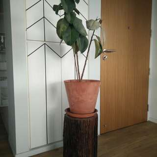 Tree Stump for potted plants