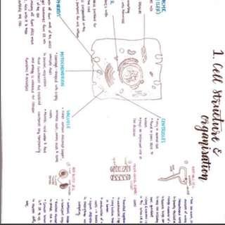 (DISCOUNT) O Level Pure Bio Notes (HANDWRITTEN) ✨