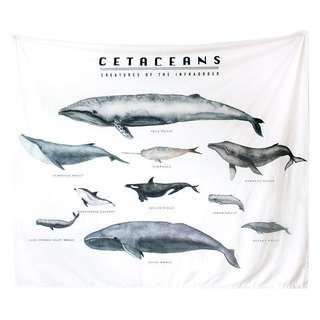 徵收鯨魚掛布🐳