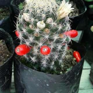 Succulents & Cacti for sale