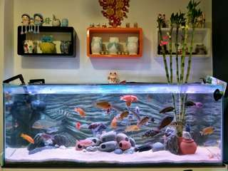 4 ft Fish Tank with rack, light and filter