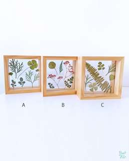 Pressed: Mix Botanicals in wooden photo frame