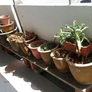 Flower pots. Giving away FREE to bless