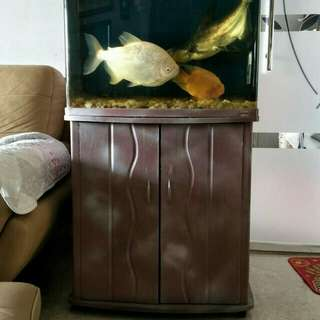 Fish tank with built in filter and cabinet