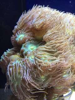 Marine coral reef aquarium and fish tank