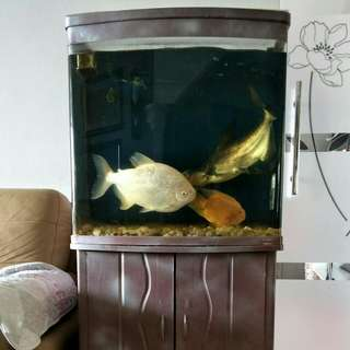 Fish tank with filter and cabinet