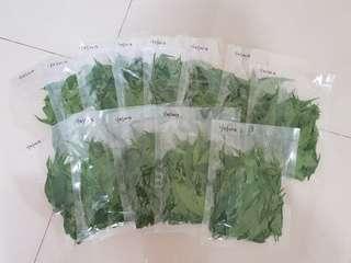 Fresh Sabah Snake grass vacuum packed