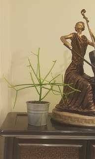 '阔展/Reach out' Euphorbia tirucalli @ pencil cactus