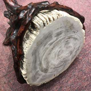 Fossil wood stool