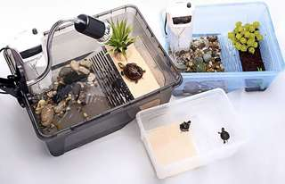 Terrapin tank with breeding area (White, Large Size)