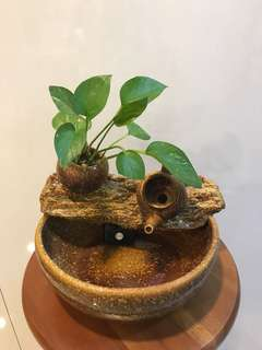 Feng Shui Water Fountain with Money Plant