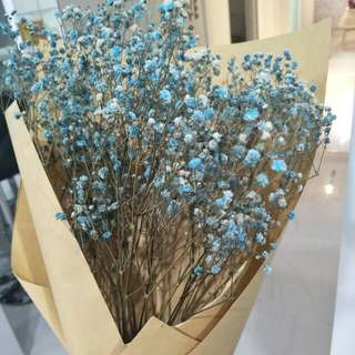 Baby Breath Bouquet Dried - Light Blue