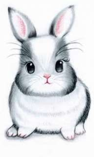 Bunny Grooming - Housecall (April slots now for booking!!)